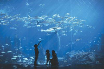 The Lost Chambers Aquarium