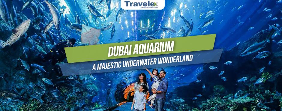 Dubai Aquarium And Underwater Zoo Travelex Travels And Tours