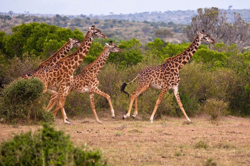 Kenya Safari package