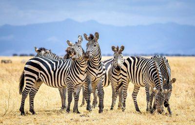 Tanzania tour package