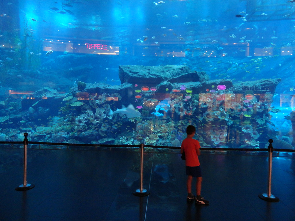 Book Dubai Aquarium Tickets Online