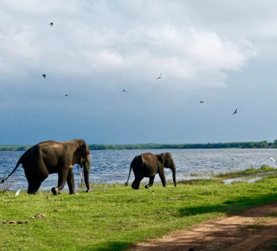 Sri Lanka holiday packages from Dubai