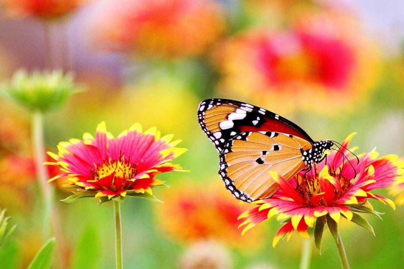 Butterfly Garden Dubai Ticket