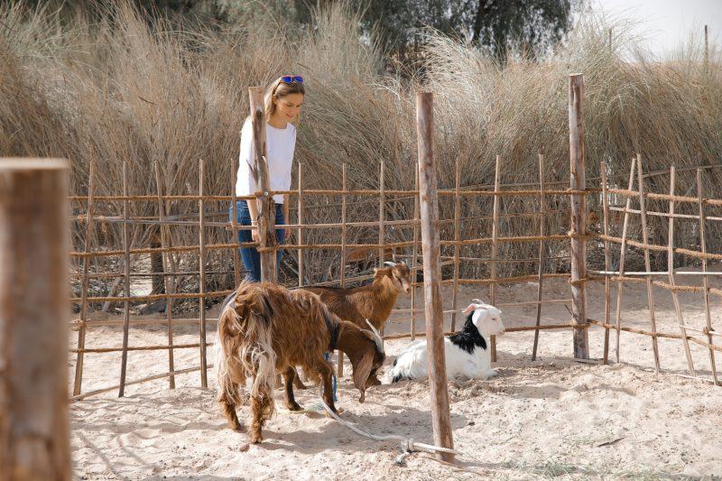 Farm Animals Morning Bedouin Experience
