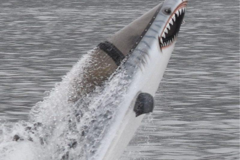 Seabreacher Shark