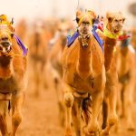 Camel Racing Club Dubai