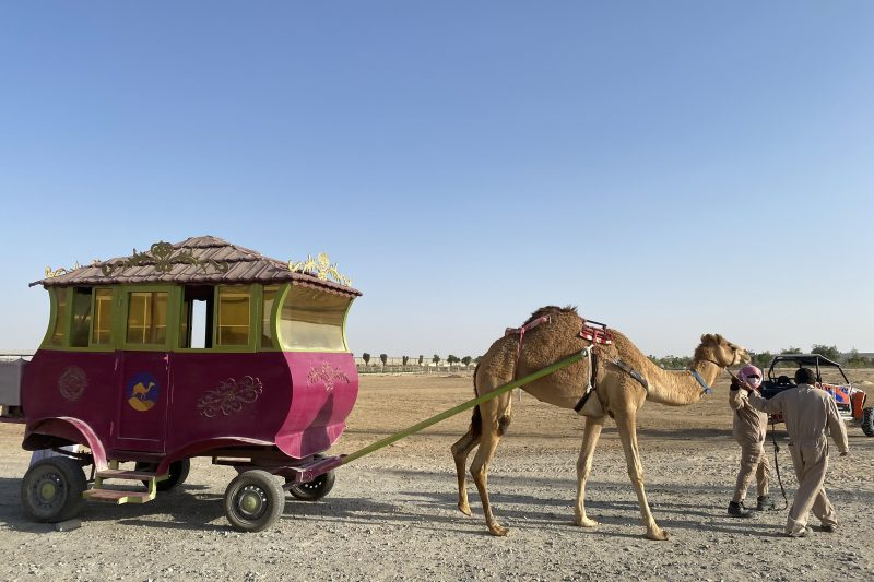 camel carriage ride